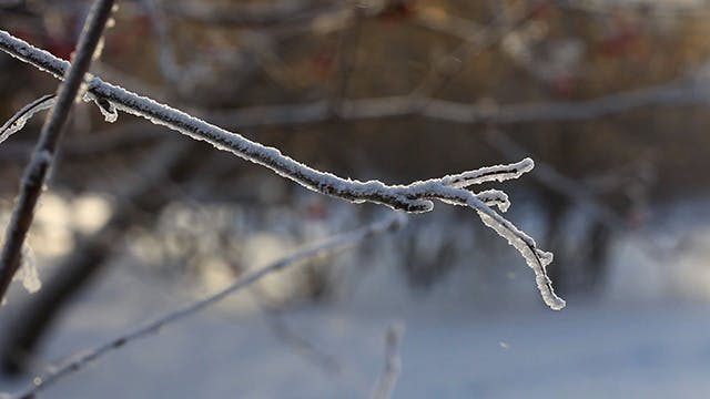 Thumbnail for Winter tree branch