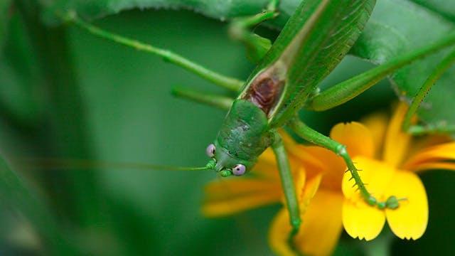 Thumbnail for Grasshopper 3