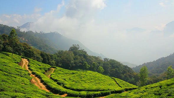 Thumbnail for Mountain Tea Plantation In Munnar Kerala India