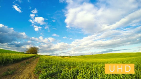 Thumbnail for Clouds over the Rapeseed Field