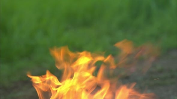 Thumbnail for Forest Fires