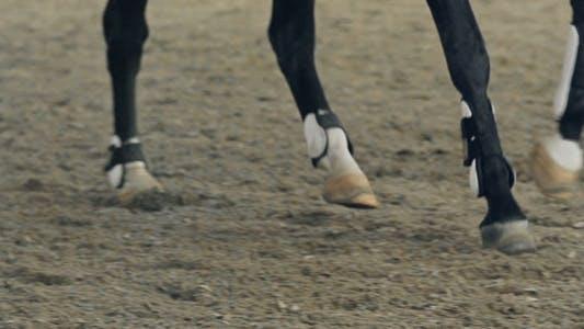 Thumbnail for Horse Leg Wraps