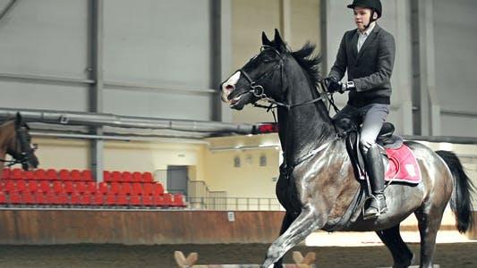 Thumbnail for Horse Training