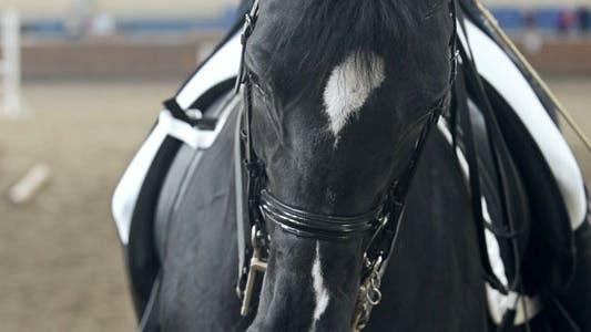 Thumbnail for Black Horse