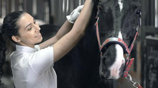 Thumbnail for Equine Assisted Activities