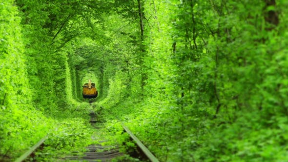 Thumbnail for Train in a Green Tunnel of Trees