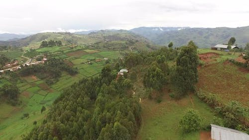 Aerial view of trees, houses and fields, Uganda
