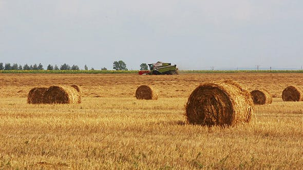 Thumbnail for Harvested Bales Of Straw And Combine-Harvester