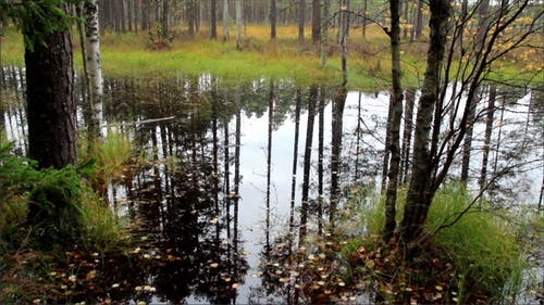 Water Within the Forest