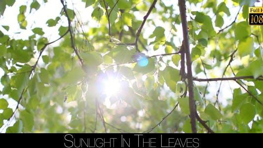 Thumbnail for Sunlight In The Leaves 9