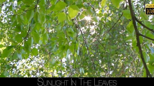Thumbnail for Sunlight In The Leaves 10