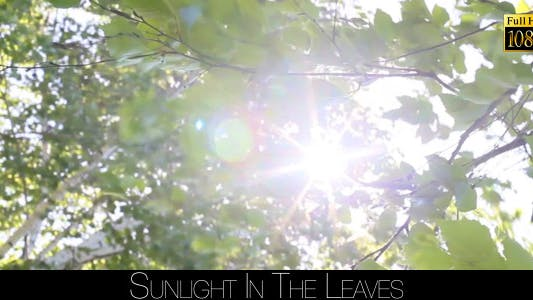 Thumbnail for Sunlight In The Leaves 12