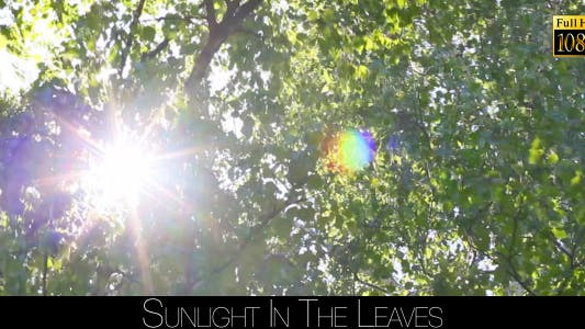Cover Image for Sunlight In The Leaves 13