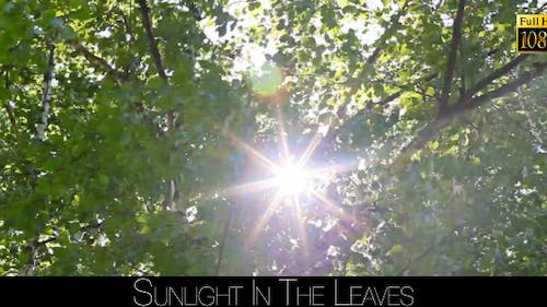 Sunlight In The Leaves 15