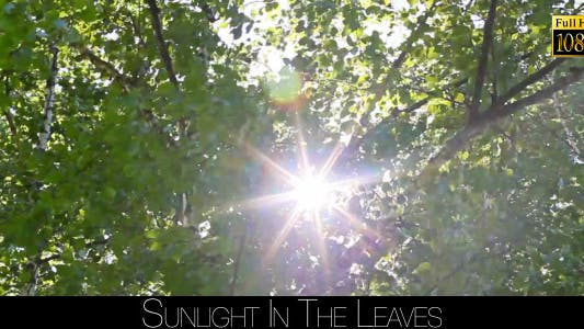Cover Image for Sunlight In The Leaves 15