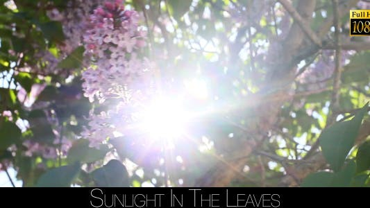 Cover Image for Sunlight In The Leaves 18