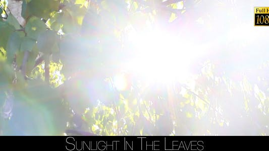 Cover Image for Sunlight In The Leaves 20