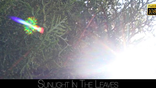 Thumbnail for Sunlight In The Leaves 21