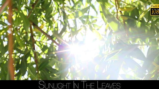 Cover Image for Sunlight In The Leaves 22