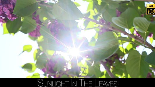 Thumbnail for Sunlight In The Leaves 28