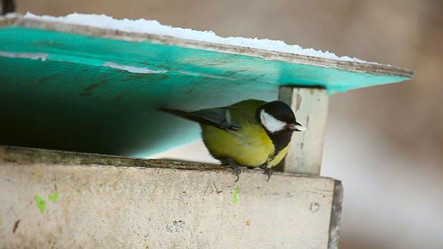 Thumbnail for Birds feeder box 1
