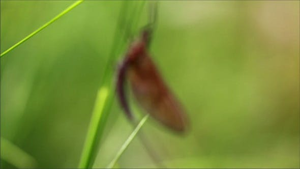 Thumbnail for Dragonfly Sticking to the Grass Stalks