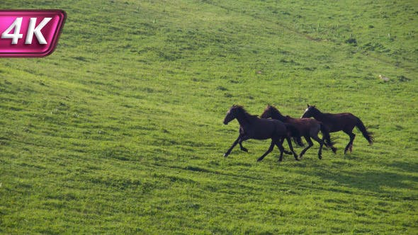 Thumbnail for Horses in the Green Foothills