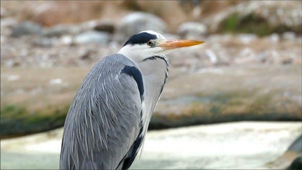 Un oiseau héron gris avec un long bec orange