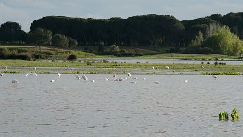 Waders in Pond