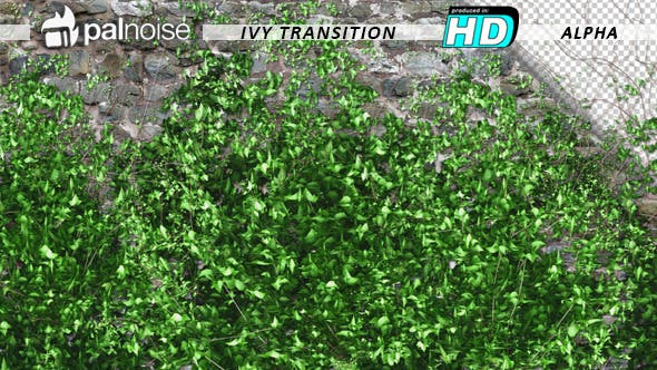 Cover Image for Ivy Growing Transition