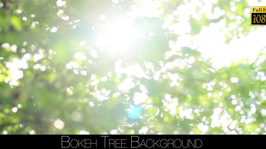 Cover Image for Bokeh Tree Background 20