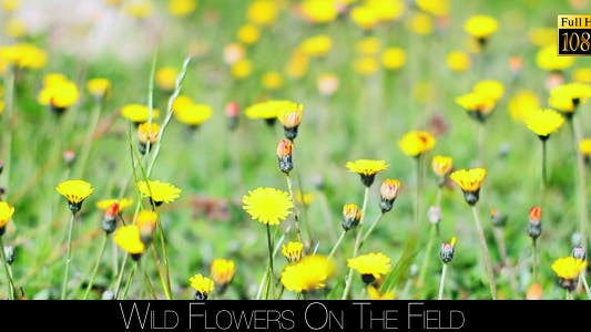Thumbnail for Wild Flowers On The Field 2