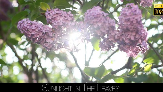Cover Image for Sunlight In The Leaves 30