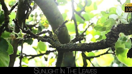 Thumbnail for Sunlight In The Leaves 32