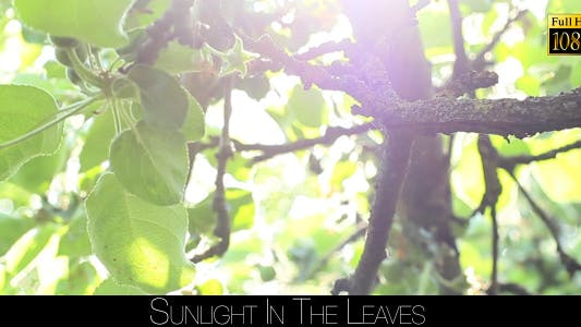 Thumbnail for Sunlight In The Leaves 33