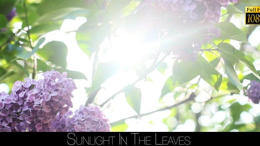 Sunlight In The Leaves 34