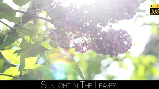 Thumbnail for Sunlight In The Leaves 35