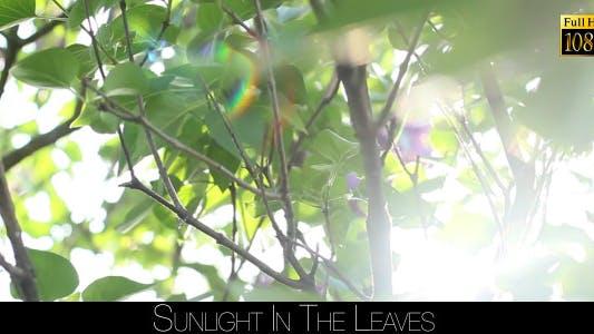 Thumbnail for Sunlight In The Leaves 36
