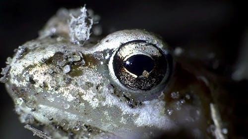 Frog Toad Eye