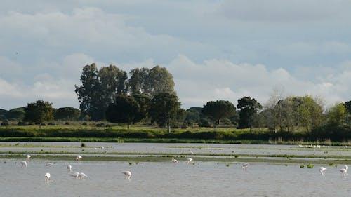 Waders in Natural Preserve