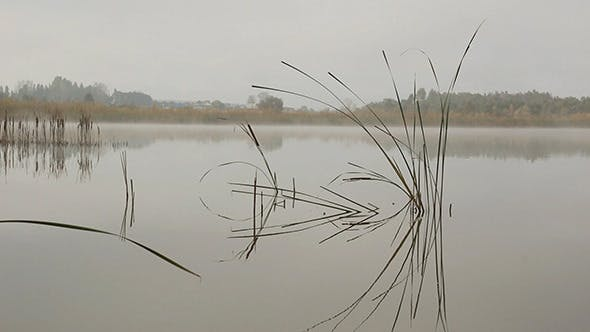 Thumbnail for Lake Landscape In Mist - Stems Of Reeds Reflected
