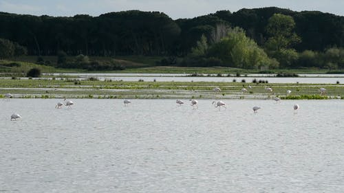 Flamingo and Waders in Pond or Marsh