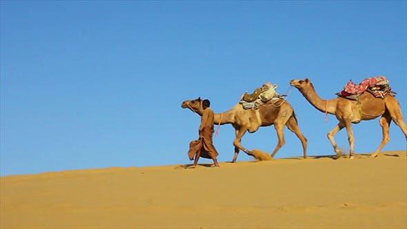 Thumbnail for Cameleers In Desert