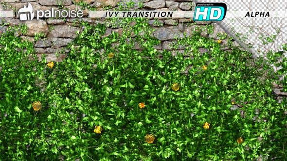 Thumbnail for Ivy and Yellow Flowers Growing