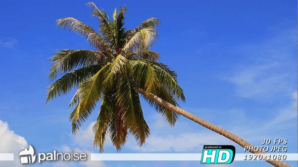 Thumbnail for Palm Tree Beach, Paradise Dream