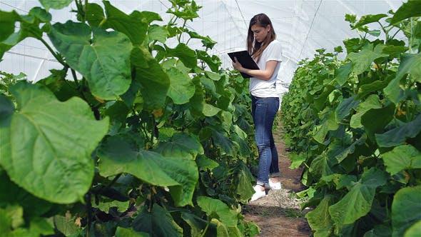 Thumbnail for Girl Agronomist Taking Notes