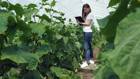 Thumbnail for Girl Agronomist Makes Notes Between The Green Rows