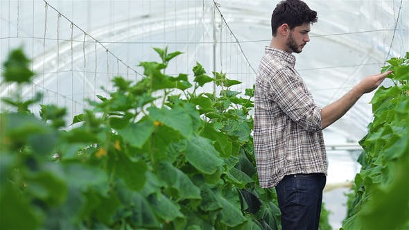Thumbnail for Guy With The Tablet Slowly Inspect Plants