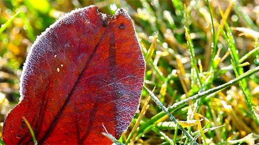 Thumbnail for Autumn Leaves