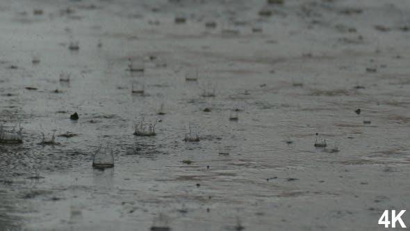 Thumbnail for Rainy Day